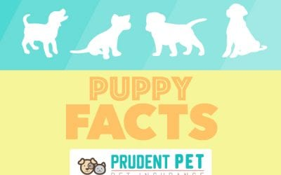Puppy Facts and Dog Pregnancy Information