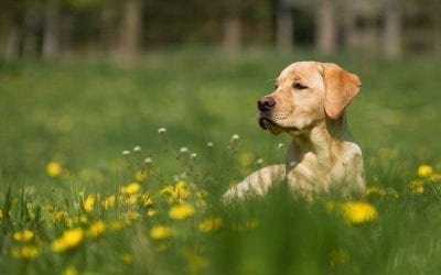 Mental Disorders in Dogs