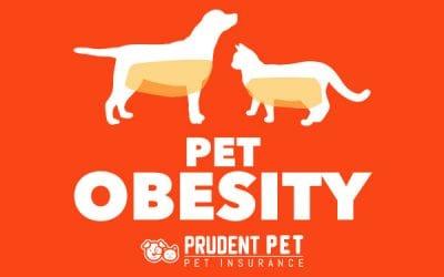 Pet Obesity, Statistics & Solutions in 2019