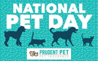 National Pet Day 2019