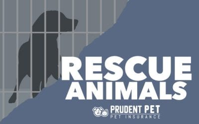 Rescue and Shelter Animals